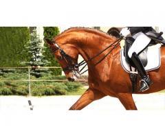 Montar a caballo en una escuela hipica de valencia