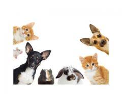 Consejos para el cuidado de gatos pequeños