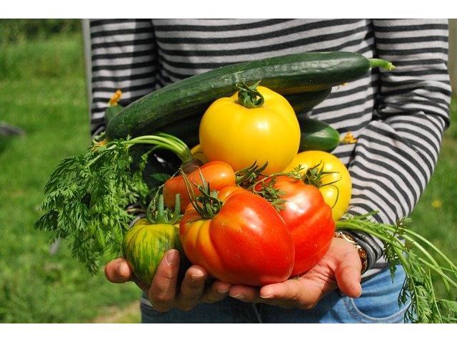 La gran variedad de fertilizantes ecológicos para jardinería