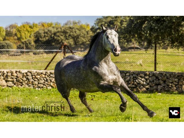 Exposición de cine, caballos PRE en la gran pantalla. SICAB 2016